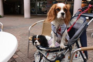 バギーに乗るチャコ&エリー