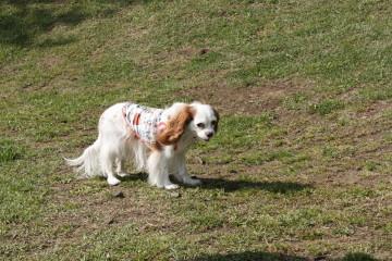 ナナちゃんも楽しそうに歩いていました