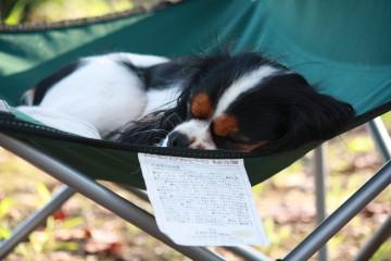 お気に入りの椅子の上で寝ているエリー
