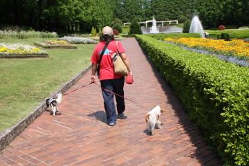 お散歩しているチャコ&エリー