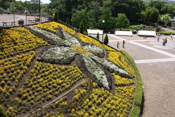 麻溝公園の花壇の植え込みクレマチスになっています