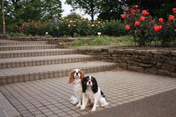 チャコ&エリー、バラの前でハイ、ポーズ