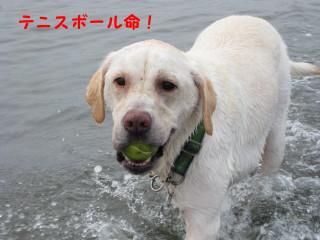 マックス海1_3_1