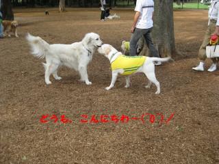 IMG_0249-1_1.jpg