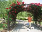 rose tunnel