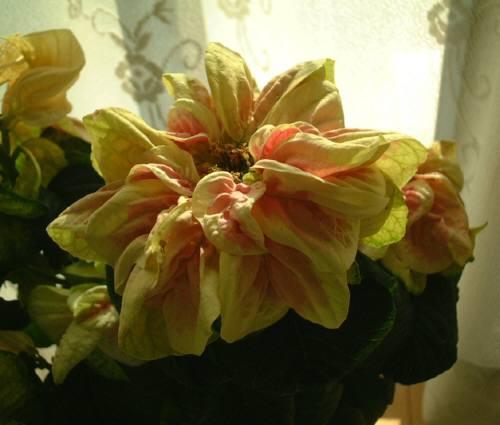 2008120202.jpg