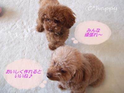 ドール&エンちゃん