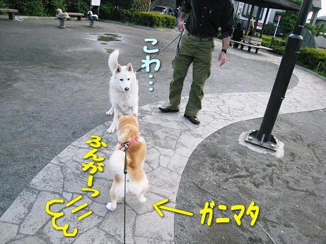 ふんが!ふんがっ!!
