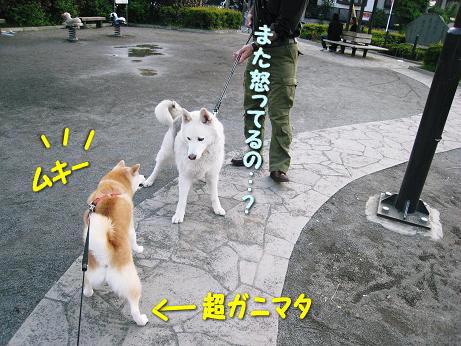 がるるるるる☆