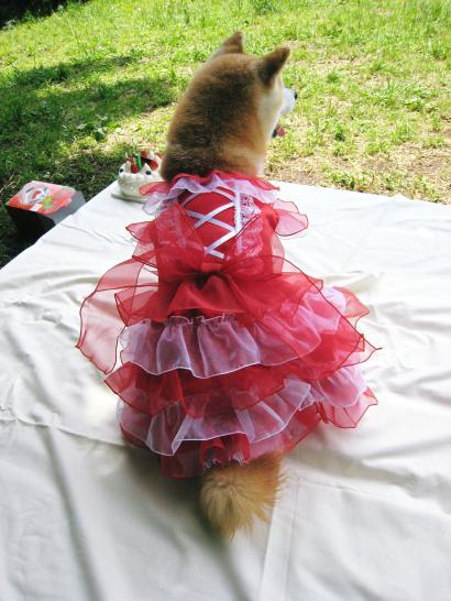 5段ふりふりドレス