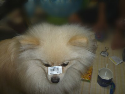 ぼちゅ700円