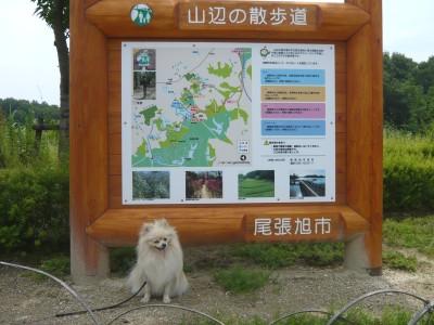 山辺の散歩道_看板犬