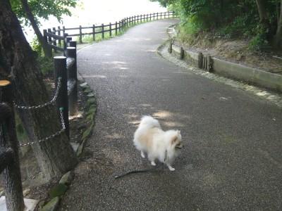 山辺の散歩道_とぼとぼ