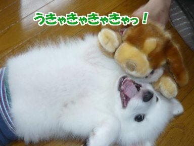 うっきゃ~!