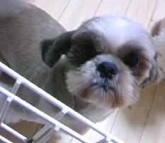 yuuma2009-4-22.jpg