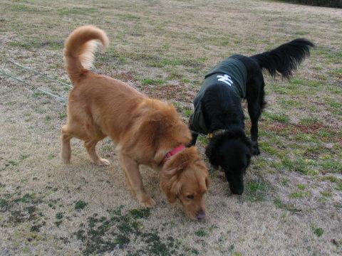 春探知犬たち