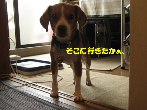 IMG_0011_sh01.jpg