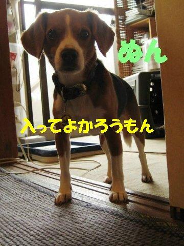 IMG_0016_sh01.jpg