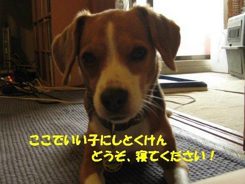 IMG_0023_sh01.jpg