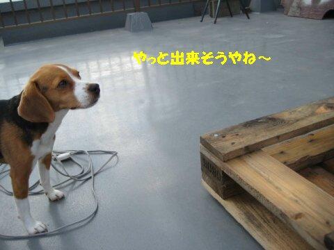 IMG_0151_sh01.jpg
