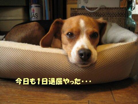 IMG_0422_sh01.jpg