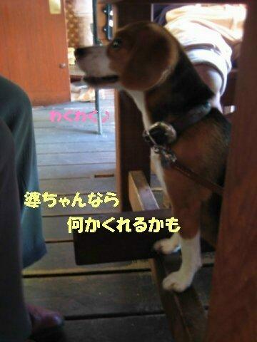 IMG_1221_sh01.jpg