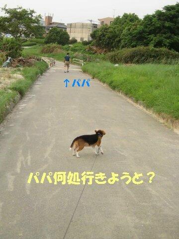 IMG_1485_sh01.jpg