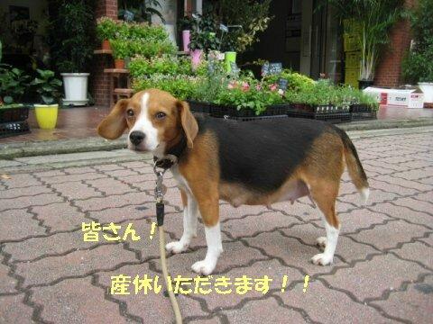 IMG_1912_sh01.jpg
