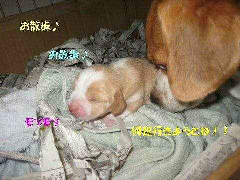 IMG_2070_sh01.jpg