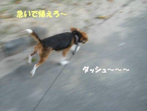 IMG_2340_sh01.jpg