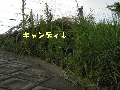 IMG_2429_sh01.jpg