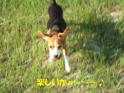 IMG_2504_sh01.jpg