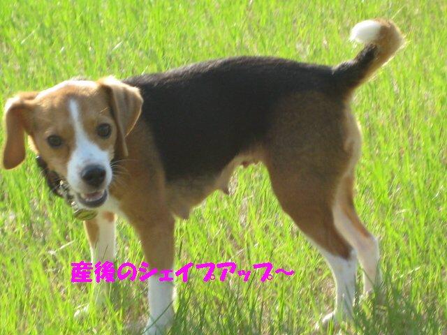 IMG_2510_sh01.jpg