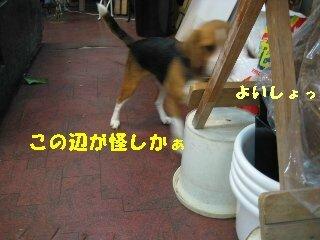 IMG_3435_sh01.jpg