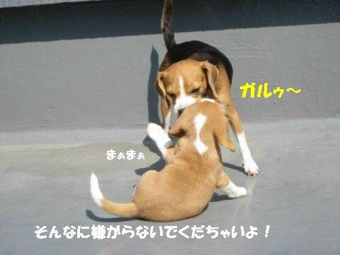 IMG_4078_sh01.jpg