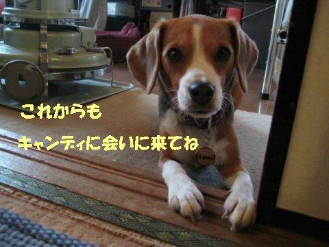IMG_4209_sh02.jpg