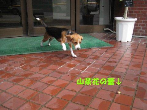 IMG_4486_sh01.jpg