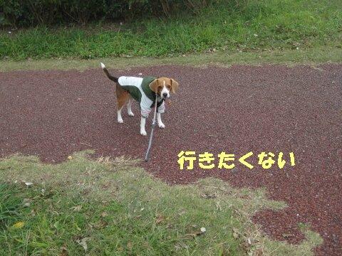 IMG_4621_sh01.jpg