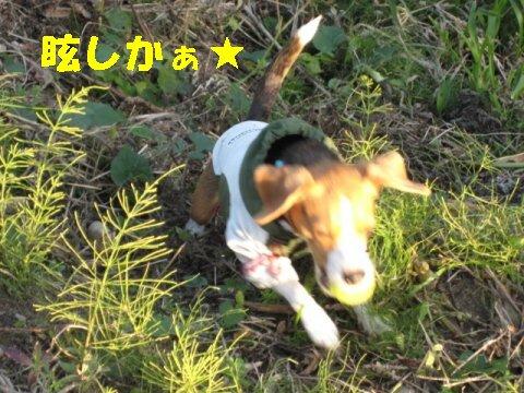 IMG_4669_sh01.jpg