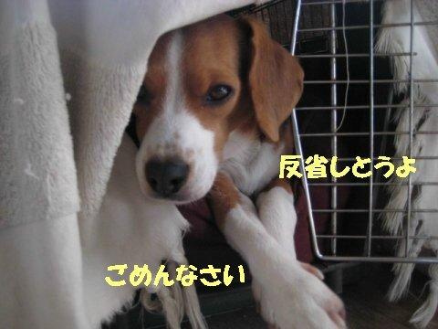 IMG_5267_sh01.jpg