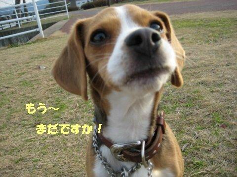 IMG_6005_sh01.jpg