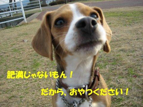 IMG_6005_sh02.jpg