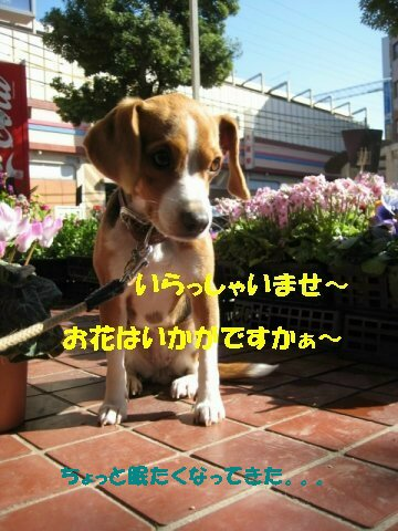 IMG_6070_sh02.jpg