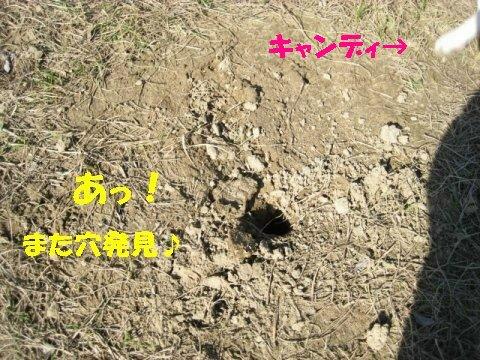 IMG_6105_sh02.jpg