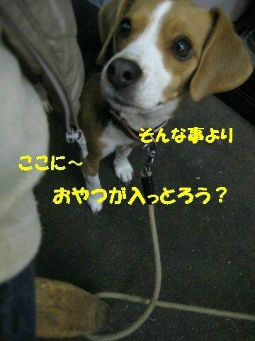 IMG_6164_sh01.jpg