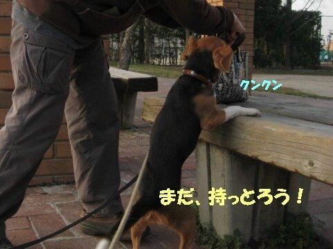 IMG_6290_sh01.jpg