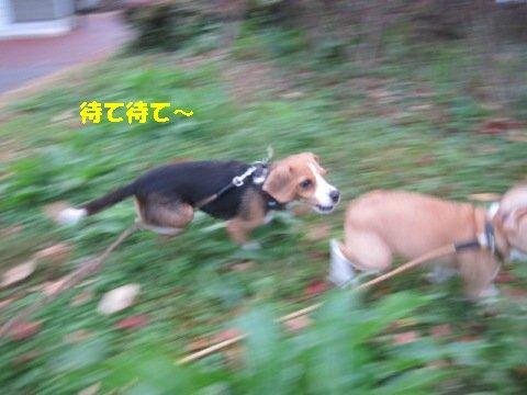 IMG_6415_sh01.jpg