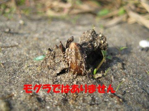 IMG_6449_sh01.jpg