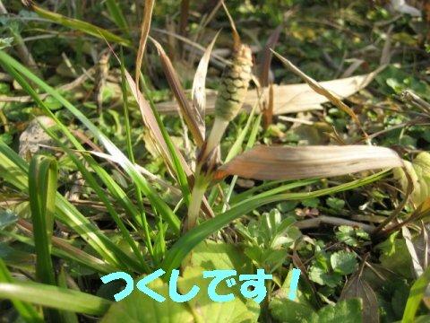 IMG_6451_sh01.jpg