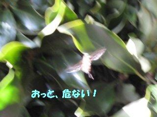 IMG_6487_sh01.jpg